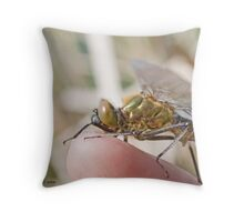 Brilliant Emerald, Somatochlora metallica on the photographer's finger.B Throw Pillow