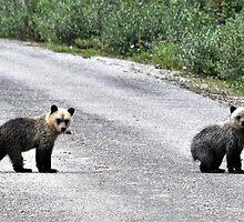 Bear season 2 by Adriano Santini