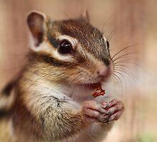Little chipmunk by Ellen van Deelen