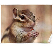 Little chipmunk Poster