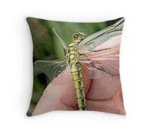 Black-tailed Skimmer on the photographer's hand  Throw Pillow
