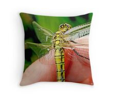 Black-tailed Skimmer on the photographer's hand B Throw Pillow