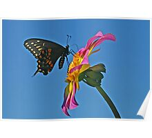 Butterfly in the Sky with Dahlia Poster