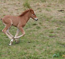 Young horse having fun by Stefanie Köppler