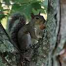 Squirrely by ericb