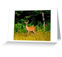 Whitetail Greeting Card