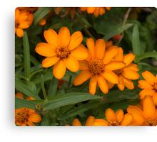 Garden Orange Yellow Flowers Canvas Print