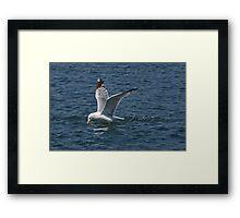 Gull On The Hunt Framed Print