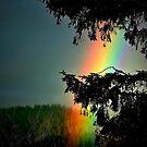 A  RAINBOW  by RoseMarie747