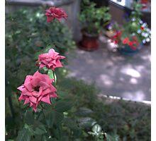 Newbury Street 3 Pink Flowers Photographic Print