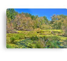 Swamp land (View Large) Metal Print