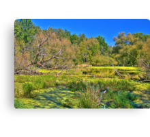 Swamp land (View Large) Canvas Print