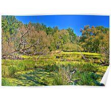 Swamp land (View Large) Poster