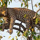 Lounge Leopard by Christina Backus