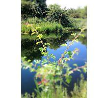 Summer-Blink Photographic Print