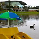Paddle boat ride ? by Ali Brown