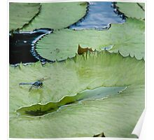 Dragonfly Watching the Lily Pad Poster