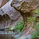 West Fork Trail by Craig Durkee