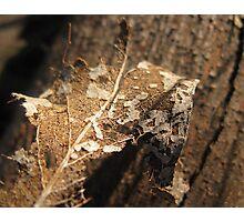 Leaf Skeleton - Structured Decomposition Photographic Print