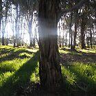 Sunlit Forest - Enchanted Light by Kim  Lambert