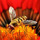 Hoverfly at work by Shehan Fernando