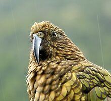 Undercover Bird by Damien Milan