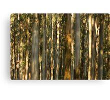 Gums, Mount Dandenong  Canvas Print