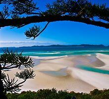 Whitehaven Beach, Queensland by Anthony Milnes