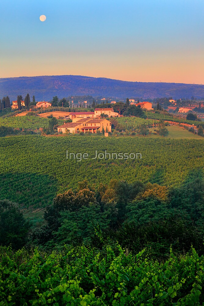 San Gimignano Vineyards by Inge Johnsson