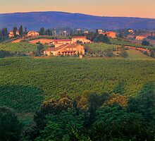 San Gimignano Vineyards by Inge Johnsson