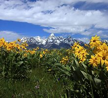 Teton Wildflowers by David Kocherhans