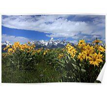 Teton Wildflowers Poster
