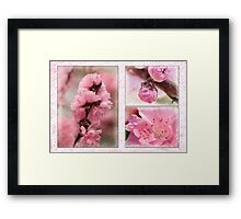 Spring triptych in pink Framed Print