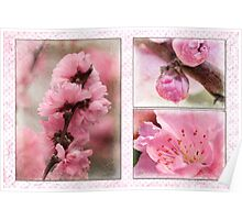 Spring triptych in pink Poster