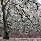 Dance with Lichen by Sarah Trent