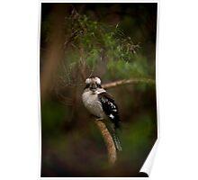 Kookaburra, Mount Dandenong Poster