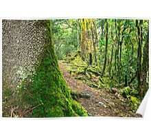 Forest trees covered with moss and dew Poster