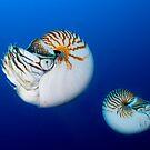 Nautilus by Carlos Villoch
