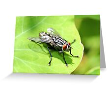 Flesh Fly Greeting Card