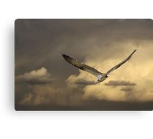 Distance Hunting Canvas Print