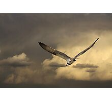 Distance Hunting Photographic Print