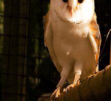 Barney Owl by Trevor Kersley