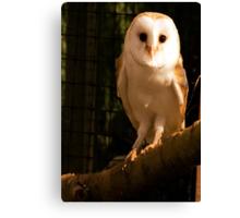 Barney Owl Canvas Print
