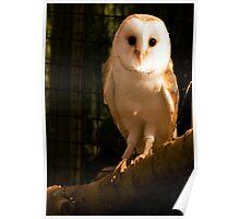 Barney Owl Poster