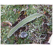 Frosty gum leaf Poster