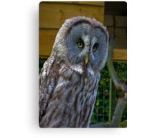 Owl #3 Canvas Print