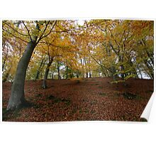 Awesome Autumn - Jutland, Denmark Poster
