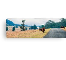 Outback Cows  Canvas Print