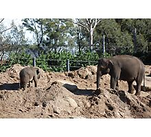 baby elefant Photographic Print