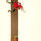 Spanish window by Paul Pasco